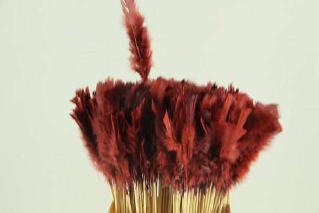 PICK PLUMA RED-BROWN 50CM X 10 UNI