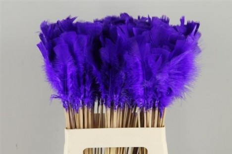PICK PLUMA PURPLE-BLUE 50CM X 10 UNI