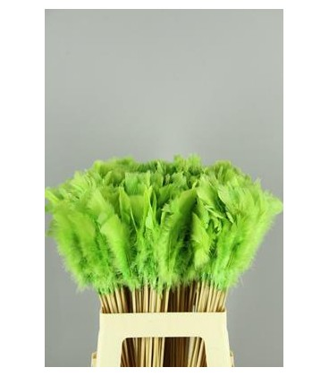 PICK PLUMAS APPLE GREEN 50CM X 10 TLLS