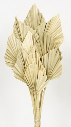 PALM SPEAR NATURAL